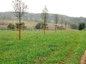 Realizace veřejné zeleně Hostivice-jih